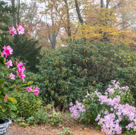 Banner pink flowers in fall.jpg