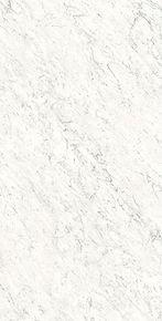veined-white.jpg