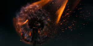 a wish maker burns