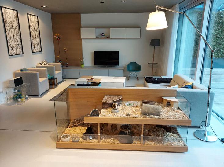 Meerschweinchenzuhause-Maisonette-M.jpg