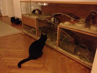 Katzensicheres Sondermodell Maisonette M in Eiche