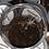 Thumbnail: Pterinopelma sazimai