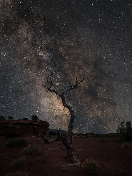 Capitol Reef National Park Tree Milky Way