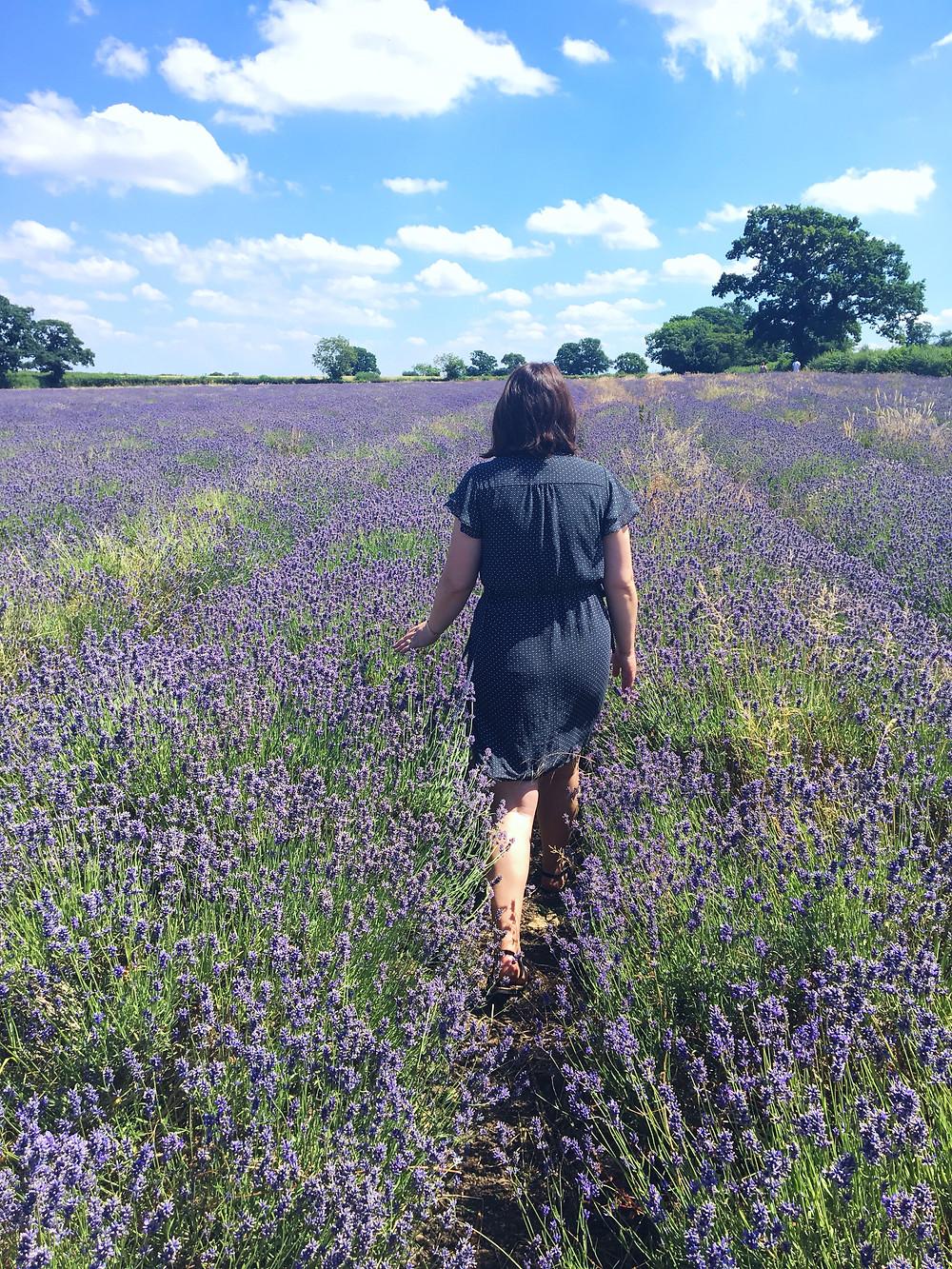Lavender benefits, lavender soy candles, lavender farms, somerset lavender farms
