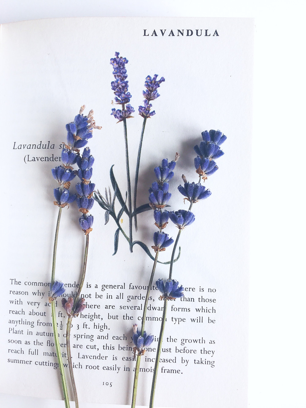 The benefits of lavender, lavender candles, relaxing candles, handmade soy candles, handmade calming candles, hazel and blue candles