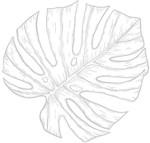 monstera-2.png