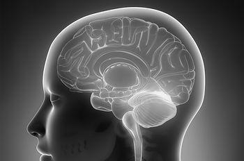 brain site.jpg