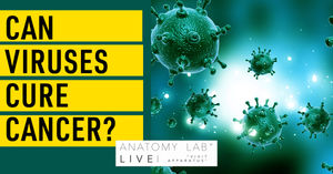 In the news this week … viruses as a cure for cancer