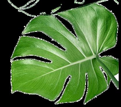 green_leaf_2.png