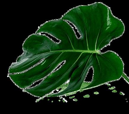 green_leaf_1.png