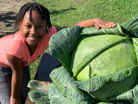 Girls grows whopping cabbage