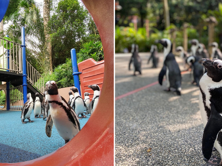 Penguins day out