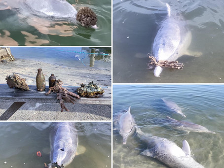 Dolphins bringing gifts