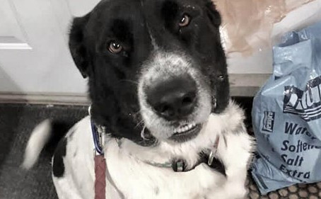 Dog adopted after 900 days