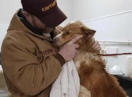 Dog reunited 54 days after tornado