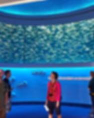 1599px-monterey_bay_aquarium_open_sea_sa