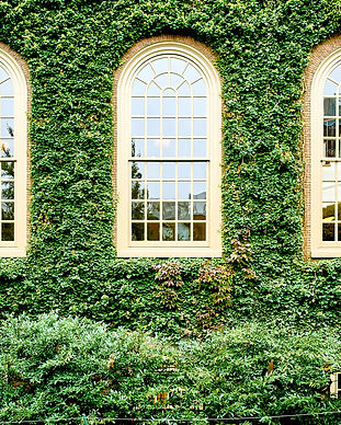 ivy-wall-in-harvard-DZENLV8.jpg