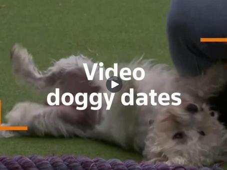 Virtual doggy dates