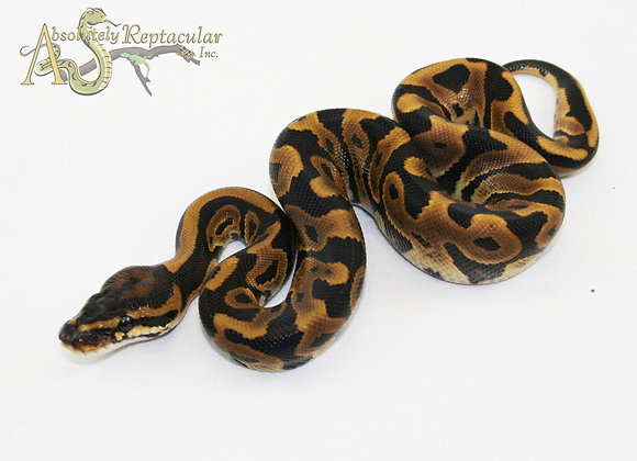 Leopard (Leo21-02m)