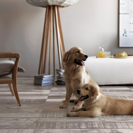 THE BEST FLOORING FOR DOGS!
