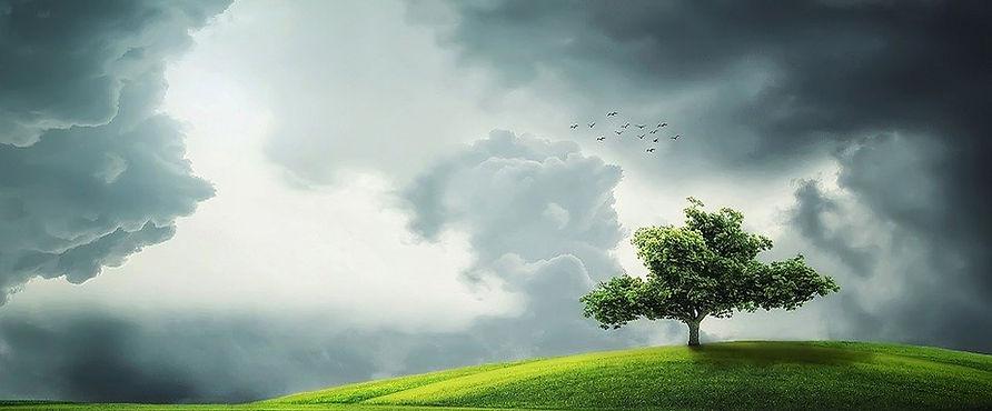 tree-832079_960_720.jpg