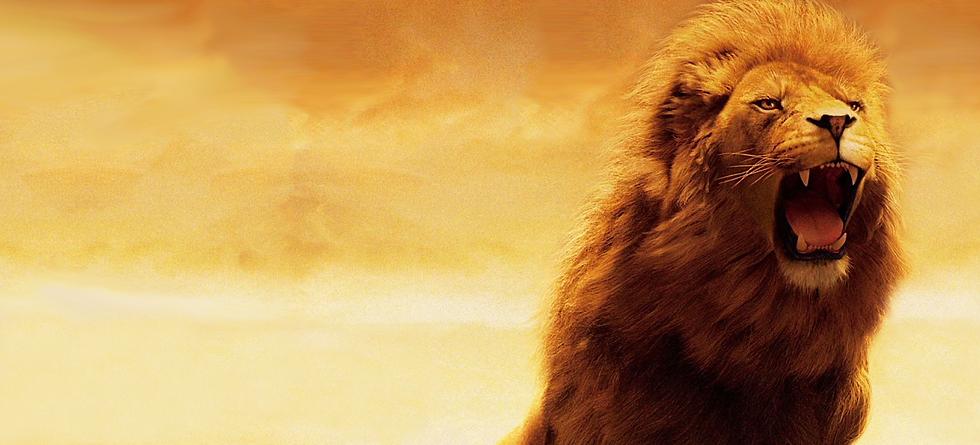 Lion%25252520Showroom3_edited_edited_edi