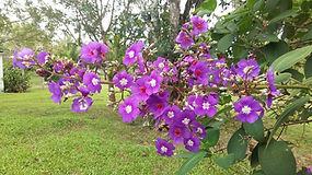 Flores do jardim do Retiro