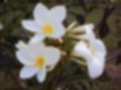 Foto de flores do Retiro