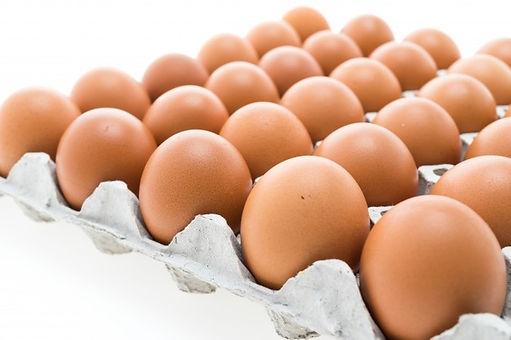 kurczak-otwarty-pojemnik-zywnosci-uroczy
