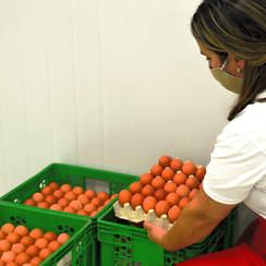 Bandeja de celulosa con 30 huevos          (a granel)