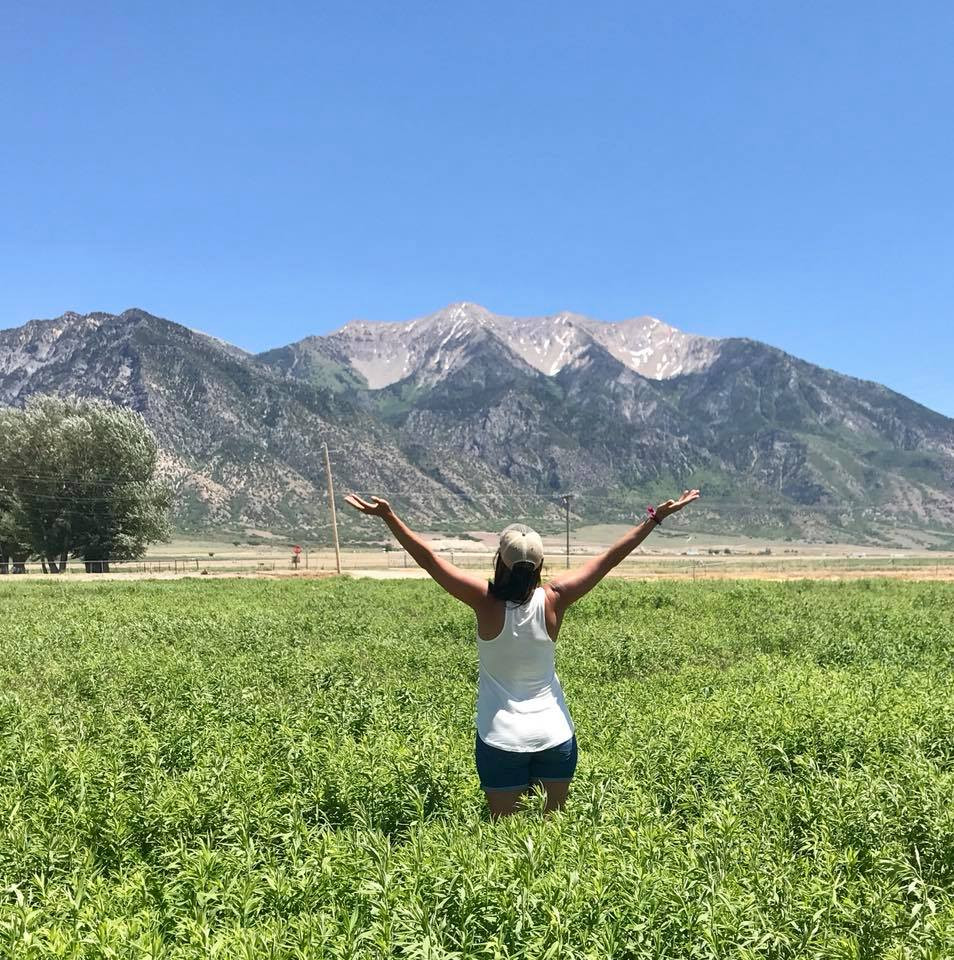Young Living Lavender Farm and Distillery—MONA, UTAH, USA