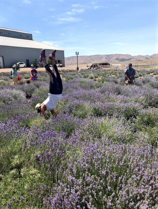 Young Living Farm Yoga