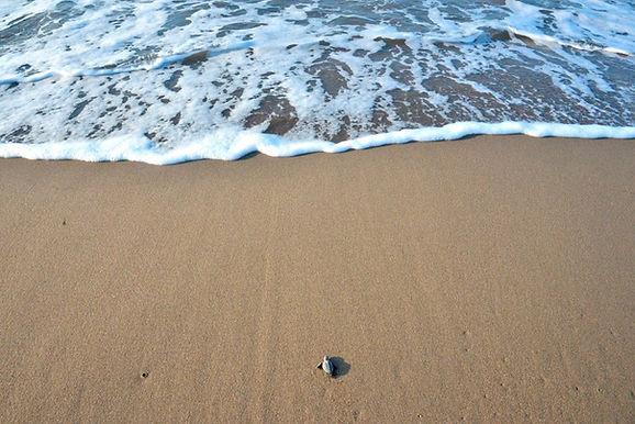karetta_suya_varıyor.jpg