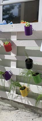 Horta vertical, reutilizando canecas sem uso.