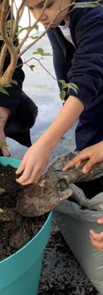 Proposta do plantio: o objetivo é aproximar as crianças da natureza e acompanhando o seu ciclo de desenvolvimento.