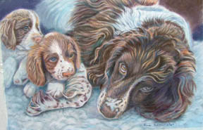SPANIELS - Spaniels up Close and Personal