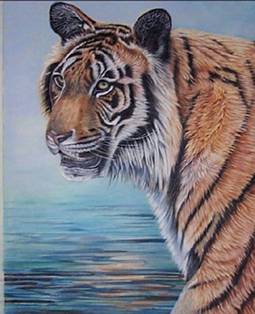Bengal Tiger painted in pastel by Ann Kilminster