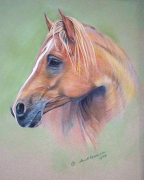 HORSES - Arabian Portrait