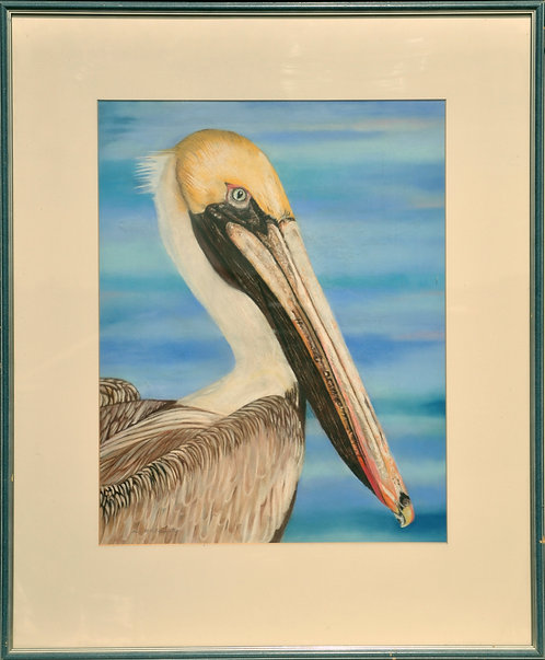 Large pastel portrait of a Pelican by Ann Kilminster