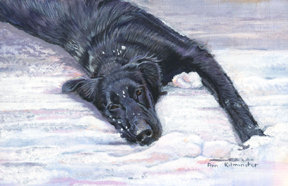 acrylic painting of a young Flatcoated Retriever lying on a carpet of snow