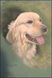 pastel portrait of a Golden Retriever by Ann Kilminster