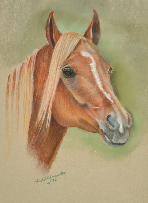 Portrait of a beautiful Arabian Horse from Montana by Ann Kilminster