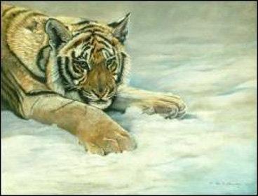 Siberian Tiger painted in pastel by Ann Kilminster