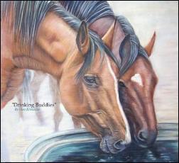 HORSES - Quarter Horses