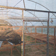 Tables inside Greenhouse