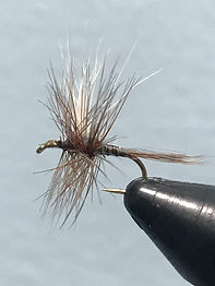 adams-dry-fly-pattern.jpg