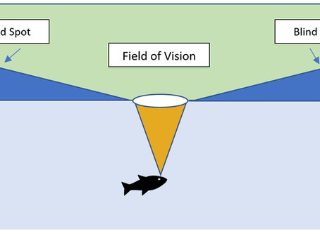 Trout Vision: How to Hide in the Blind Spot