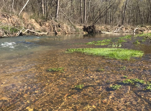 """Fly Fishing's """"Perfect Conditions"""""""