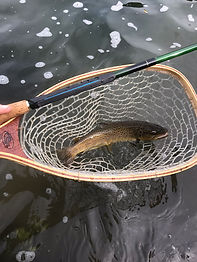 tenkara-brown-trout.JPG