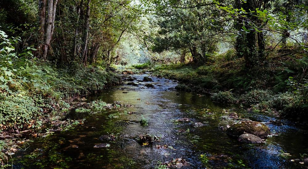 missouri-blue-ribbon-trout-stream